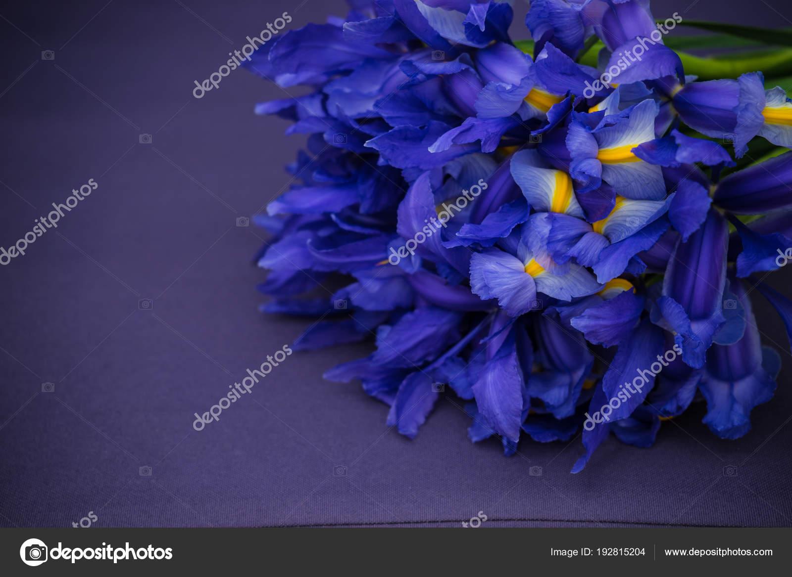 Beautiful blue iris flowers in a bouquet stock photo elet1 beautiful blue iris flowers in a bouquet stock photo izmirmasajfo