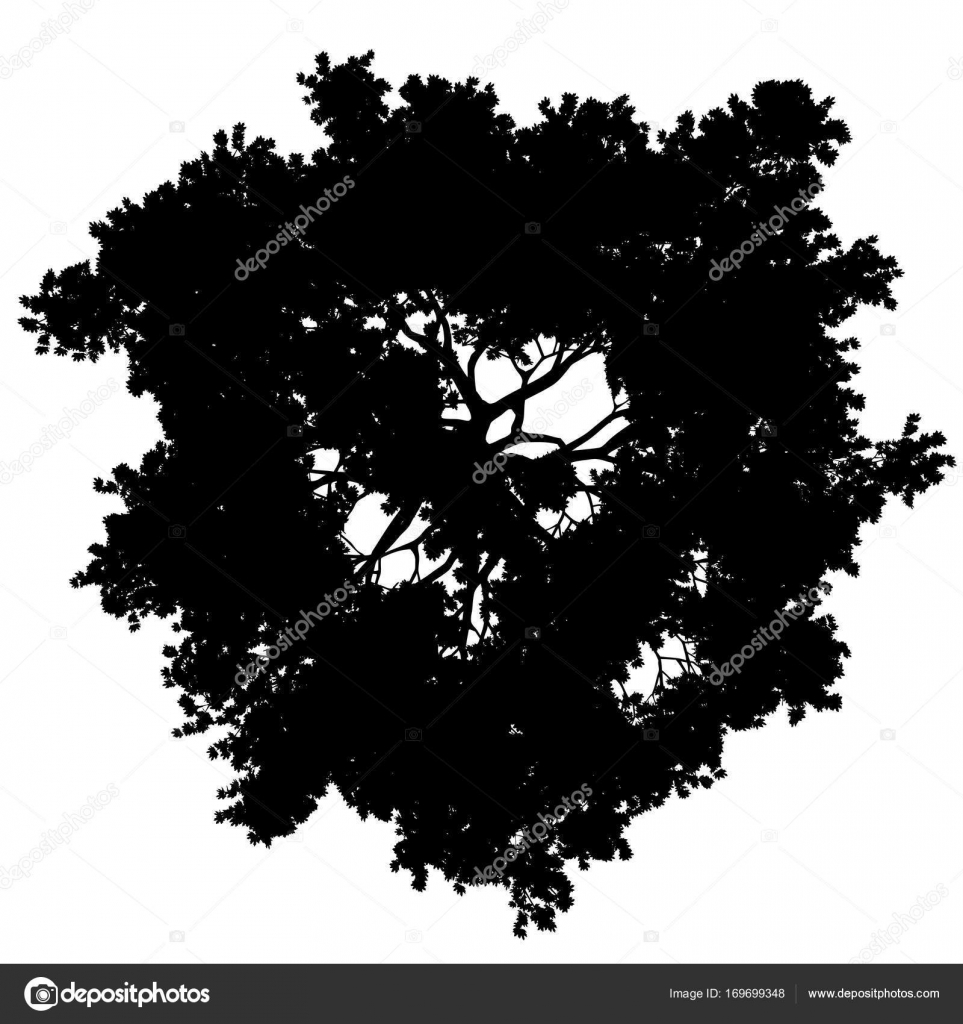 Tree top view silhouette isolated - black - vector — Stock Vector
