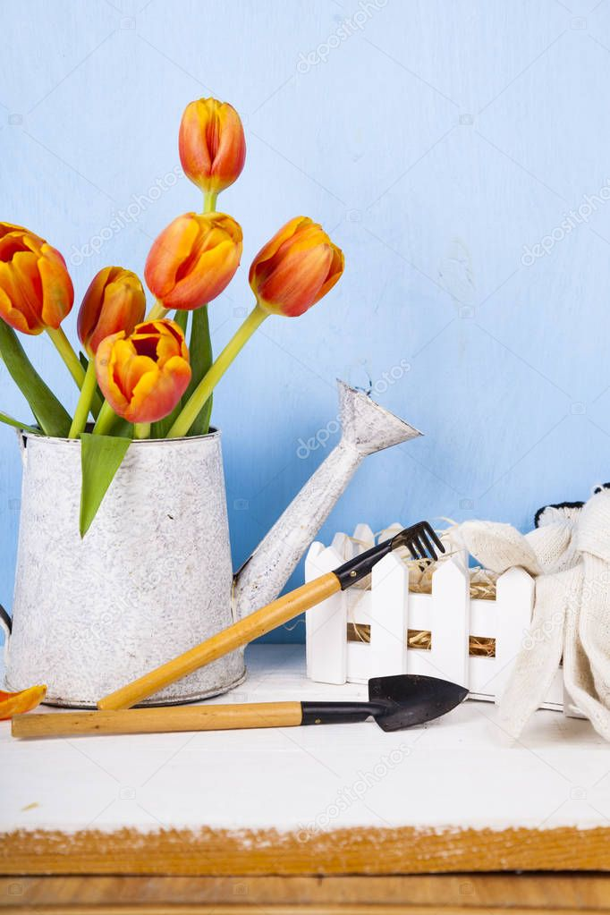 Garden tools and bouquet of tulips