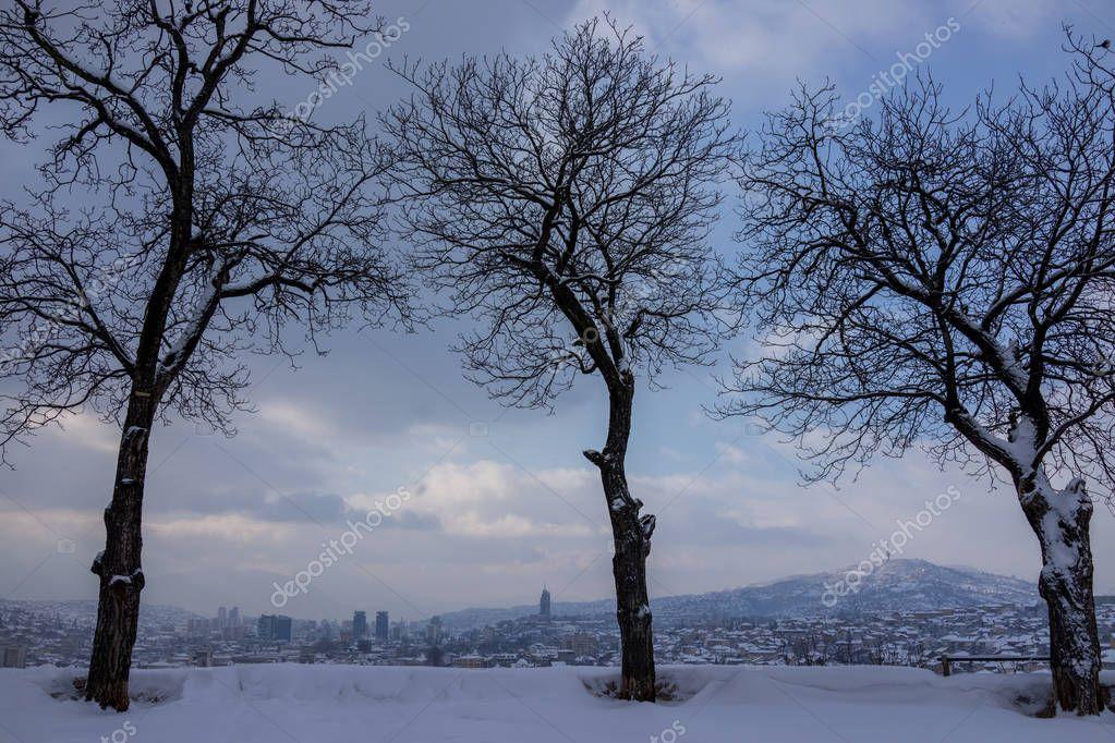 Beautiful trees on winter snow