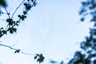 Spider net on tree branch