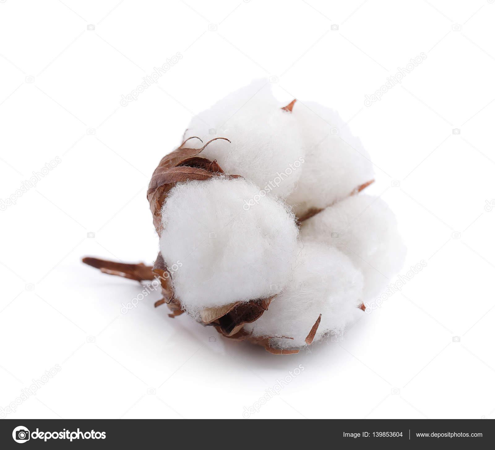 b92134f4bc Fiore di cotone su sfondo bianco — Foto Stock © yekophotostudio ...