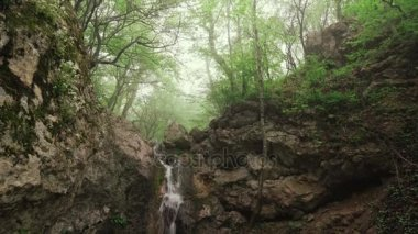 Waterfall flows in rainy forest