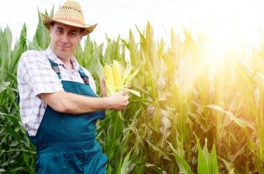 Farmer in hat inspecting corn cobs on field background