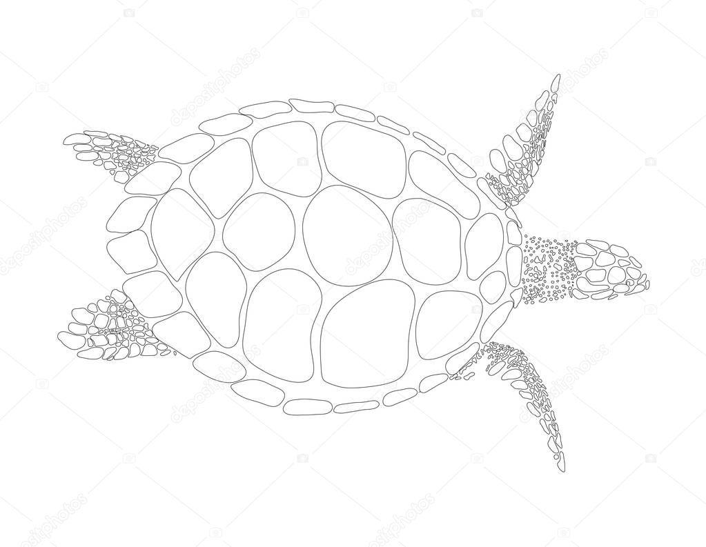 Schildkröte-Vektor-symbol — Stockvektor © ColorValley #129635536
