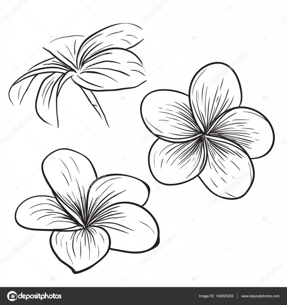 Dibujos Flor Tropical Dibujo Icono De Flor Tropical De Frangipani