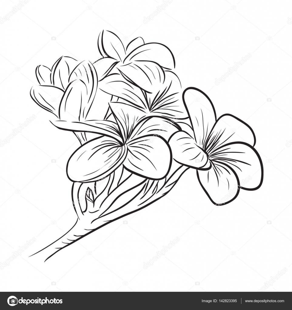Icono de flor tropical de frangipani Plumeria — Vector de stock ...