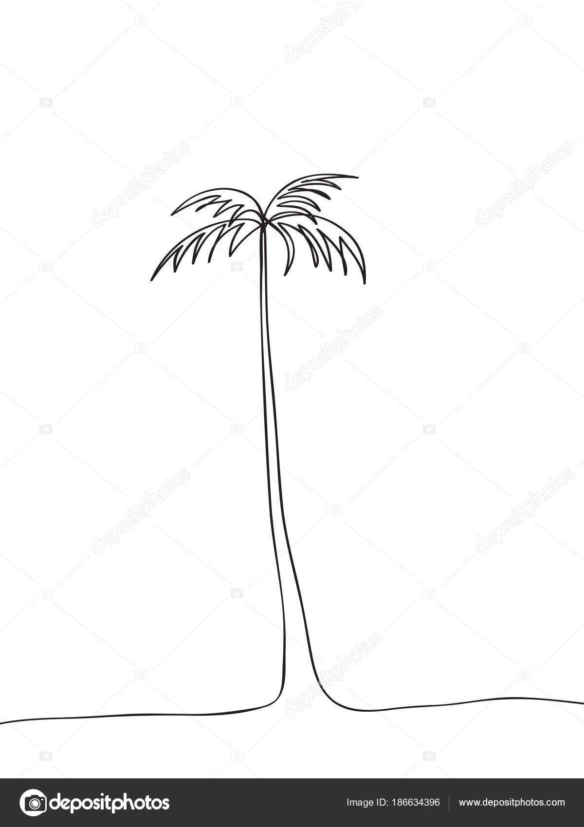 palm tree outline Stock Vector ColorValley 186634396