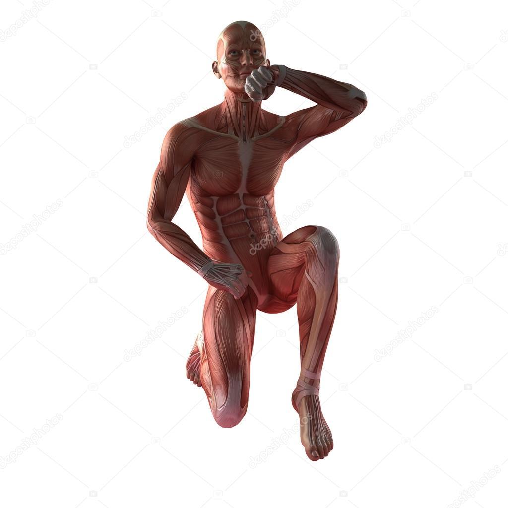 menschlichen Muskel-Anatomie — Stockfoto © icetray #125570112