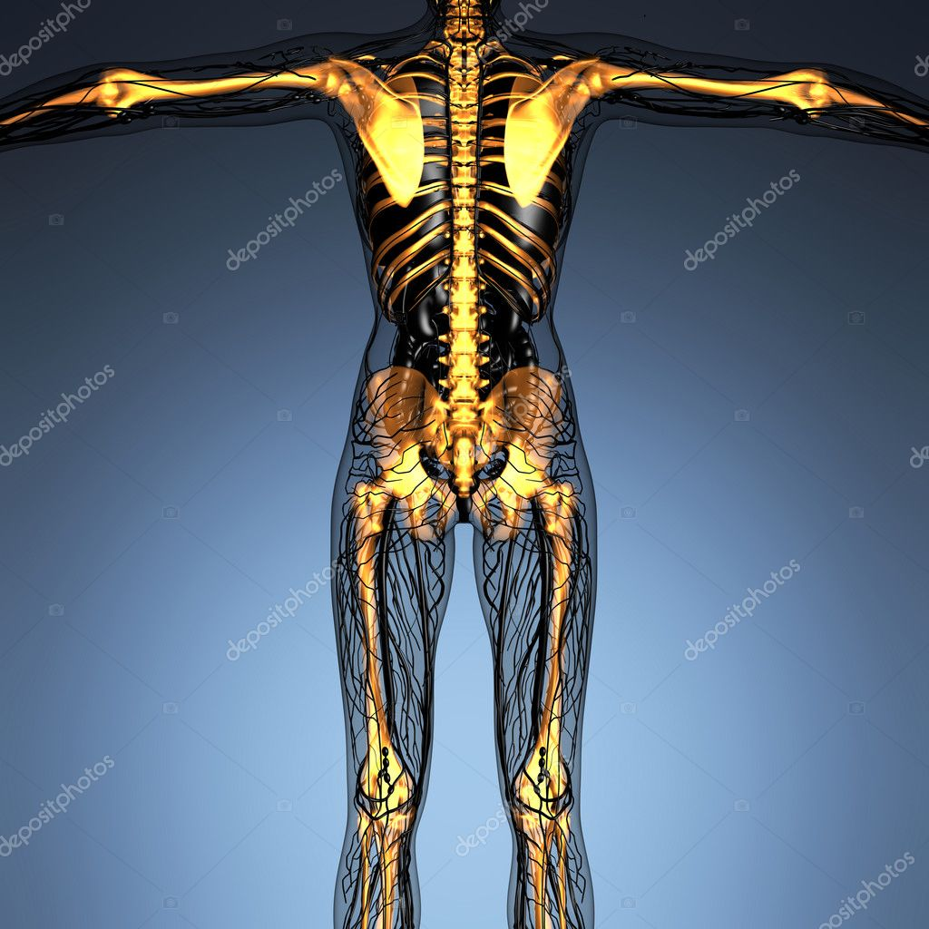 science anatomy of human body in x-ray with glow skeleton bones ...