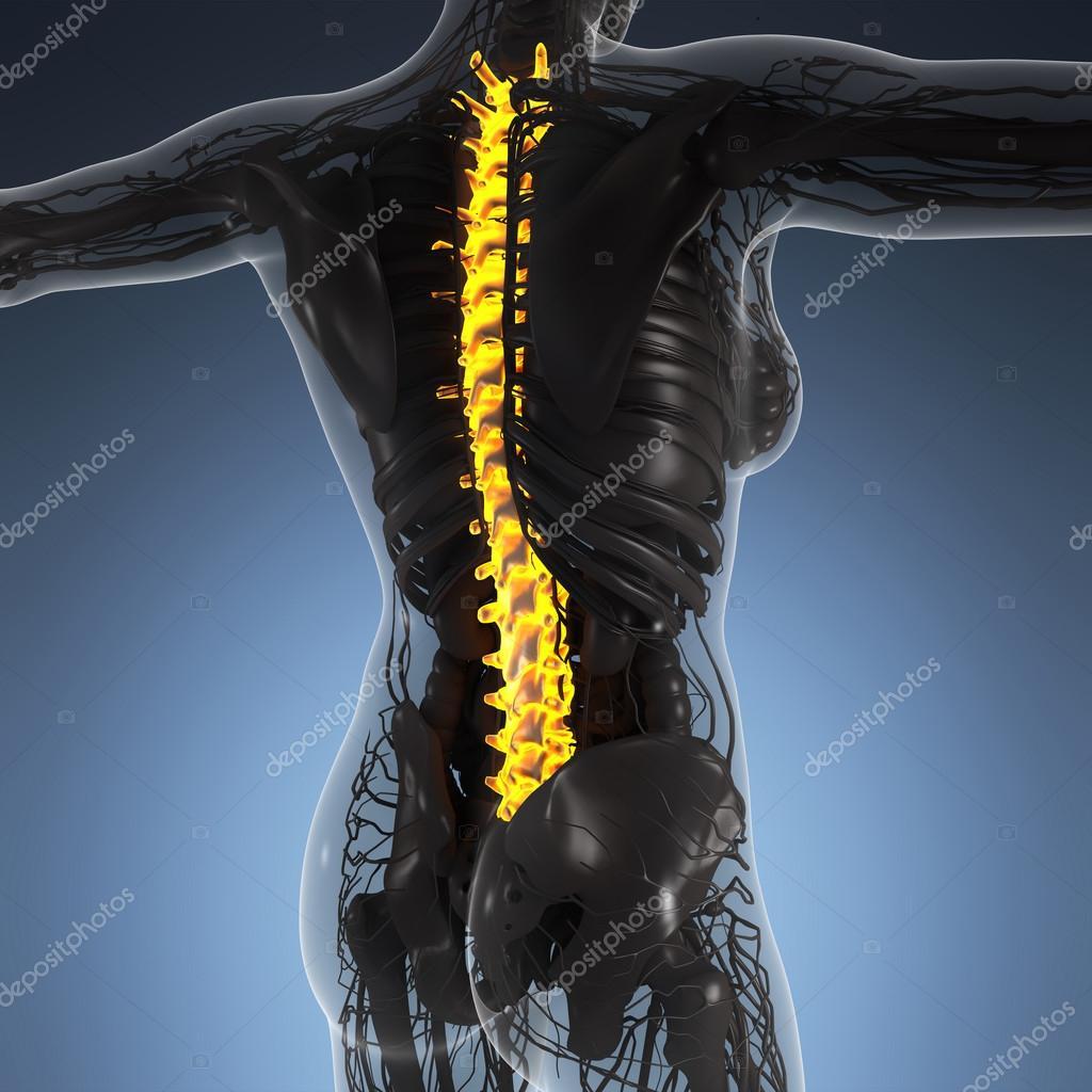 Anatomía de la ciencia del cuerpo humano en rayos x con resplandor ...