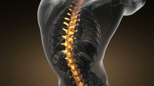 backbone. backache. science anatomy scan of human spine bones ...