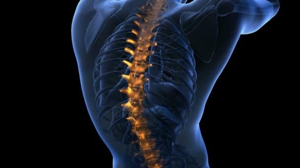 columna vertebral. dolor de espalda. exploración de ciencia anatomía ...