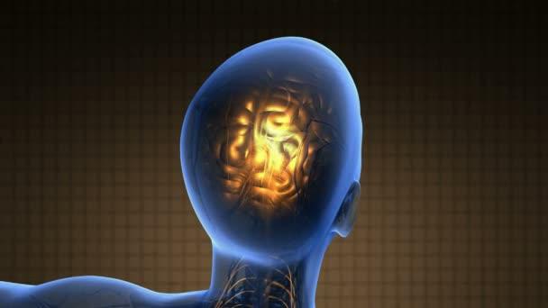Věda skenování anatomie lidského mozku zářící žlutá
