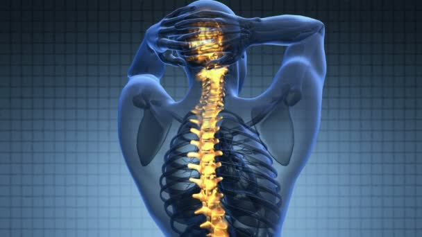 páteřní síť. bolesti zad. Věda skenování anatomie lidské páteře kostí zářící