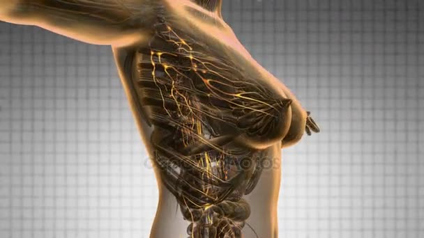 smyčky vědy anatomie skenování systému žena limphatic zářící žlutá