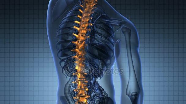 Rückgrat. Rückenschmerzen. Wissenschaft-Anatomie-Scan der ...