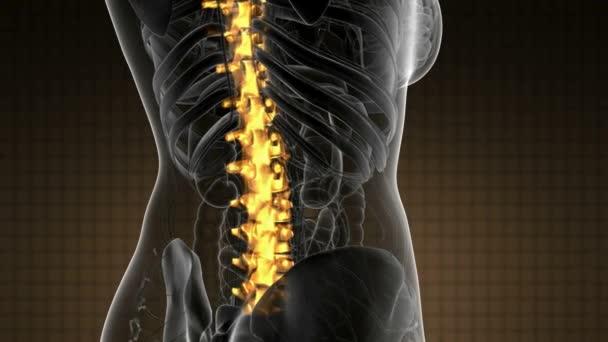 Dolor de espalda en los huesos de la espalda — Vídeo de stock ...