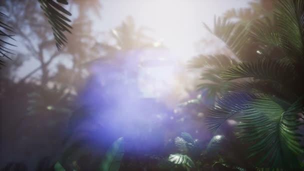Západ slunce paprsky skrze palmy