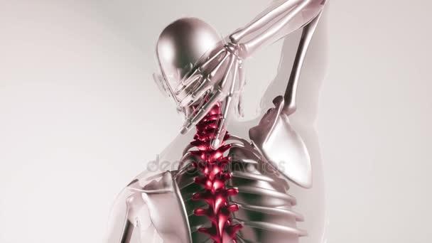 modello di scheletro di spina dorsale umana con gli organi