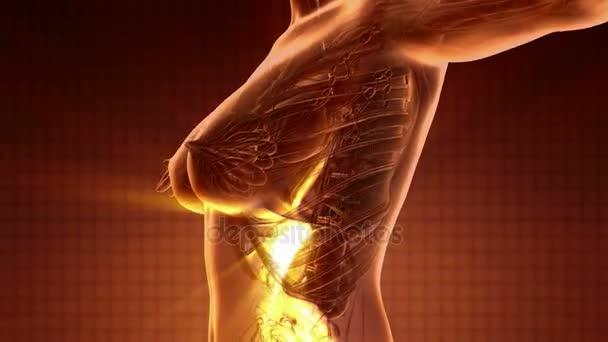Lidské tělo s trávicí systém