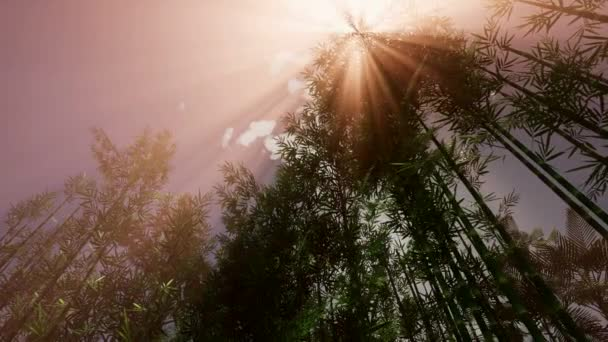 Resultado de imagen de vistas bosques