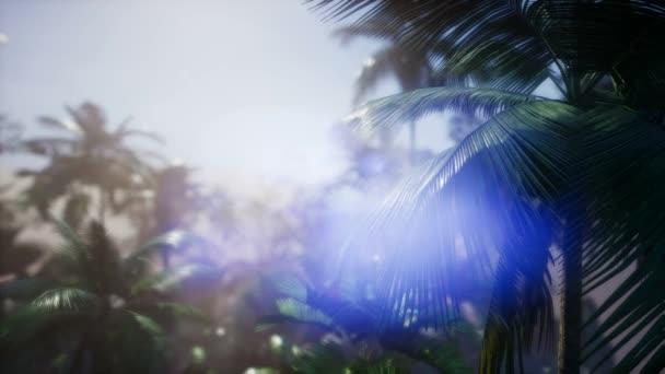 4 k úžasný západ slunce na tropické pláži s palmami. Cestovní krajiny