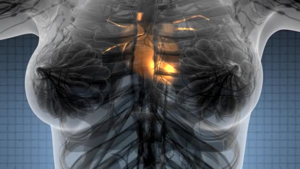 Wissenschaft Anatomie Scan des menschlichen Herzens glühend