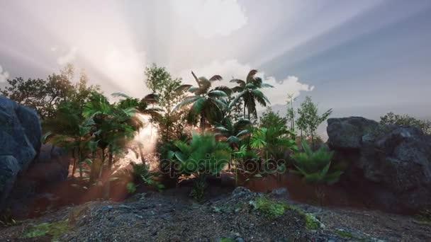4 raggi di tramonto k attraverso palme presso foresta pluviale giungla