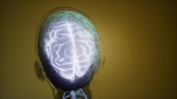 Science Anatomy Scan Of Human Brain And Nerves Glowing Stock Video