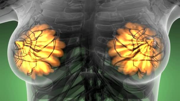 Anatomia di scienza del corpo umano nei raggi x con bagliore della ghiandola mammaria