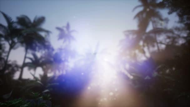 4 k élénk színek pálma fák nyári strand sunset