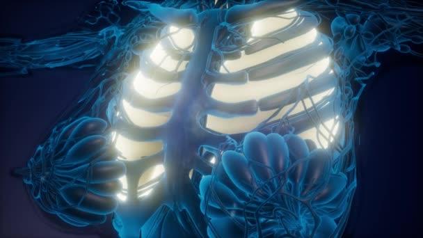exploración de ciencia anatomía de los pulmones que brilla ...
