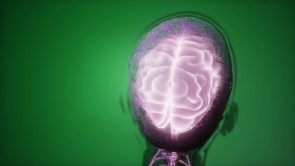 Věda prohledání anatomie lidského mozku a nervů, zářící