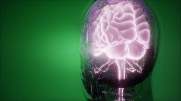 Wissenschaft-Anatomie-Scan des menschlichen Gehirns und der Nerven ...