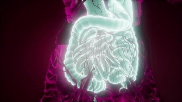 Věda anatomie skenování žena trávicí soustavy zářící