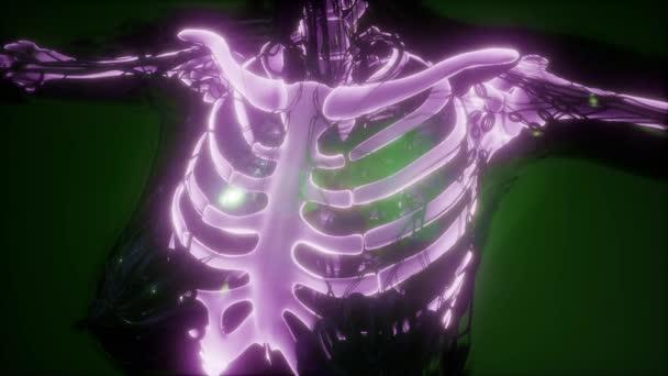 vědecké anatomie lidského těla v x-ray s kostmi kostry