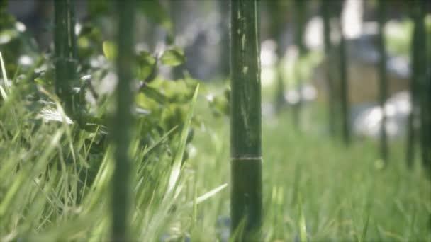 Grüne Bambusbäume Wald Hintergrund