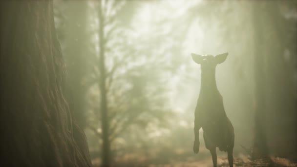extrém lassított mozgású szarvas ugrás fenyőerdőben