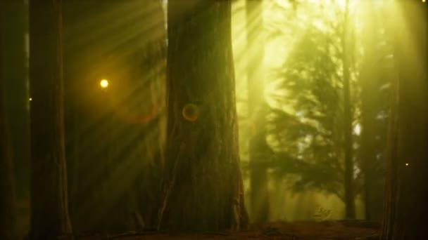Firefly a ködös erdőben köd