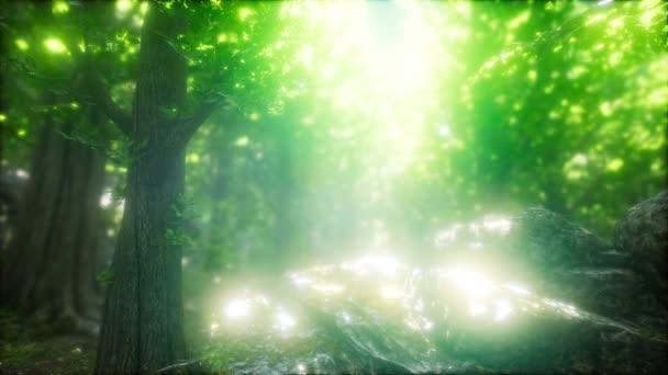 Morgen im nebligen Frühlingswald mit Sonnenstrahlen