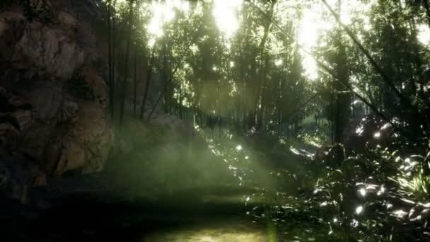 Svěží zelené listy bambusu u břehu rybníka s kameny.