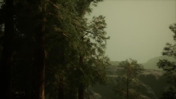 Nebel und Kiefern an zerklüfteten Berghängen und kommender Sturm