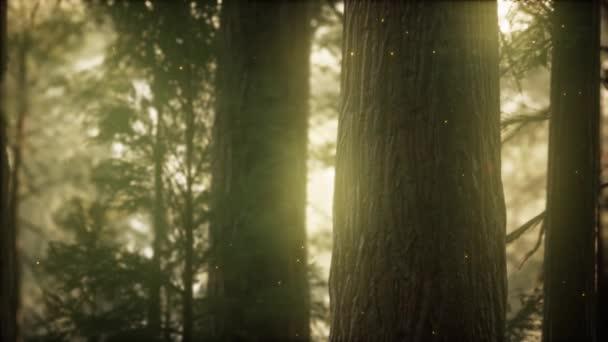 Wild pine forest at sunrise