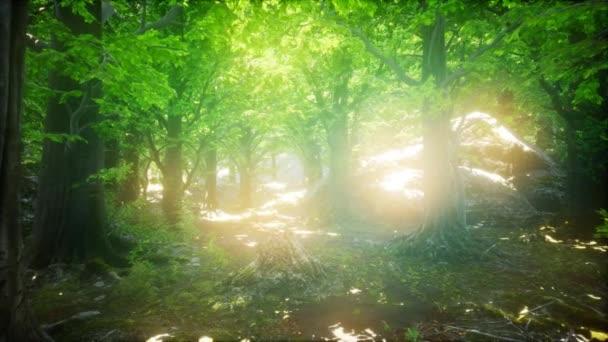 Ráno v lese na jaře Misty s paprsky slunce