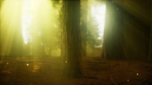 Szentjánosbogár a ködös erdőben