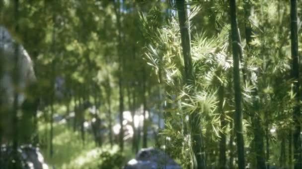 8 KB větrný bambusový háj