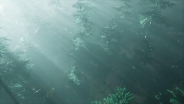 letecké sluneční paprsky v lese s mlhou