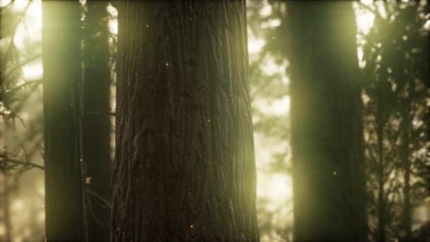 wilder Kiefernwald bei Sonnenaufgang