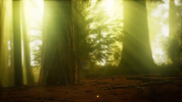 Světluška v Mlžném lese s mlhou